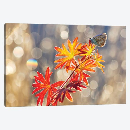 September Moments Canvas Print #OXM2173} by Vajda Béci Canvas Artwork