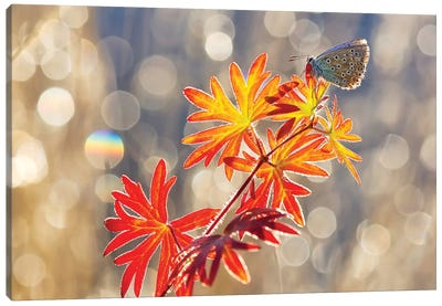September Moments Canvas Art Print