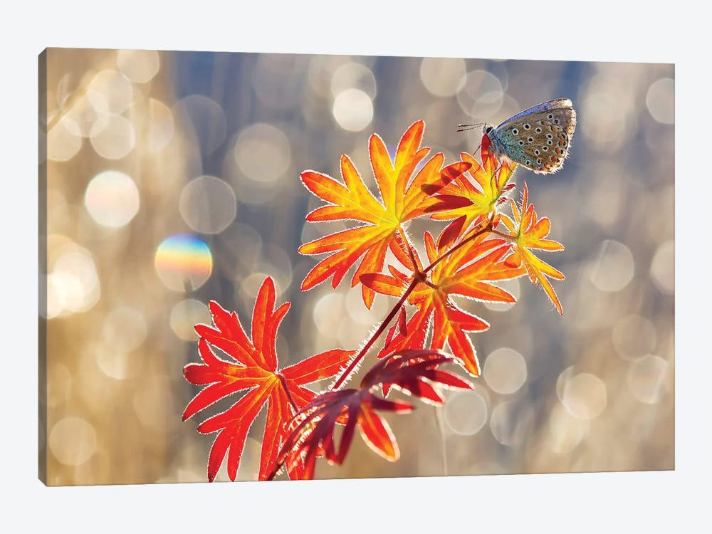 September Moments by Vajda Béci 1-piece Canvas Artwork