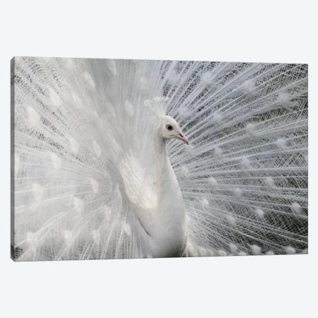 As White As Snow Canvas Print #OXM2182} by Victoria Ivanova Canvas Art Print