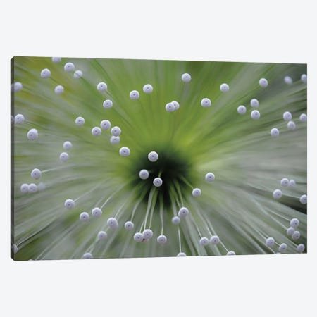 Green And White II Canvas Print #OXM2203} by Wave Faber Canvas Art