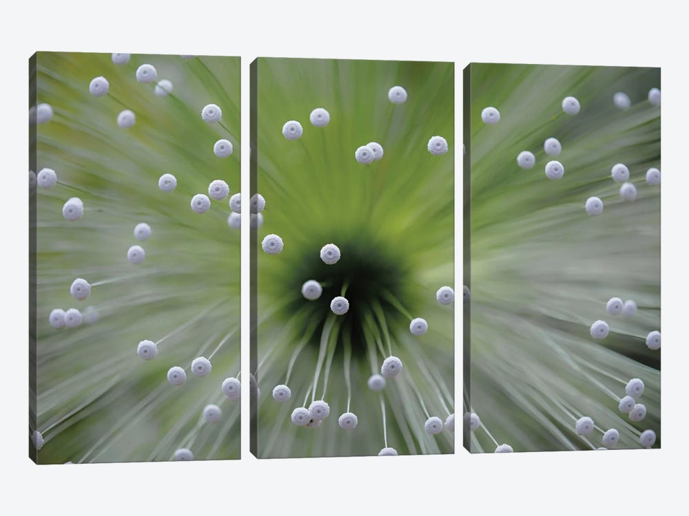Green And White II 3-piece Canvas Art Print