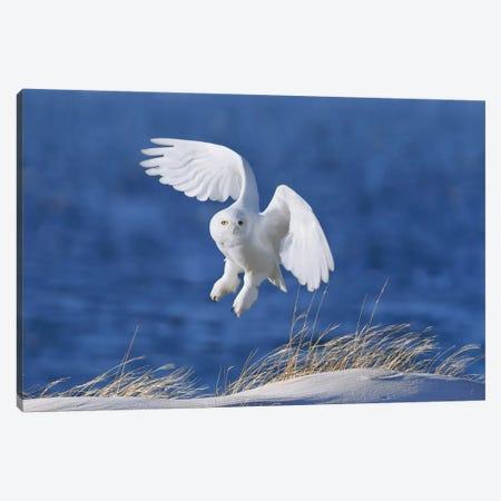 White Spirit Demon Canvas Print #OXM2207} by Wei Tang Canvas Art Print