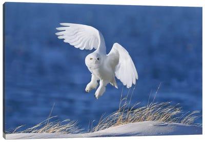 White Spirit Demon Canvas Art Print