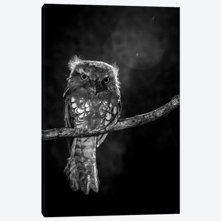 Alone In The Night Canvas Print #OXM2215} by Wilianto Canvas Artwork