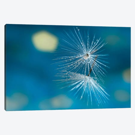 Blue Canvas Print #OXM2221} by Xavier Garci Canvas Wall Art