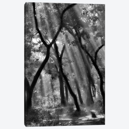 Enchanted Forest... Canvas Print #OXM2251} by Yvette Depaepe Art Print
