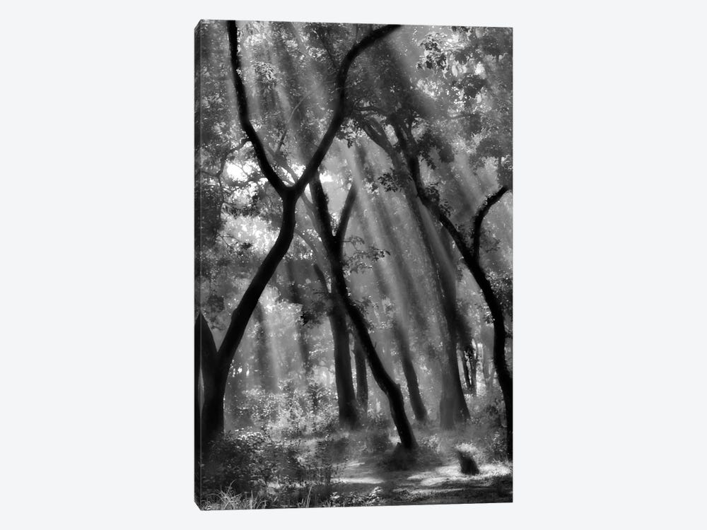 Enchanted Forest... by Yvette Depaepe 1-piece Canvas Wall Art