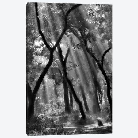 Enchanted Forest... Canvas Print #OXM2251} by Yvette Depaepe Art Print