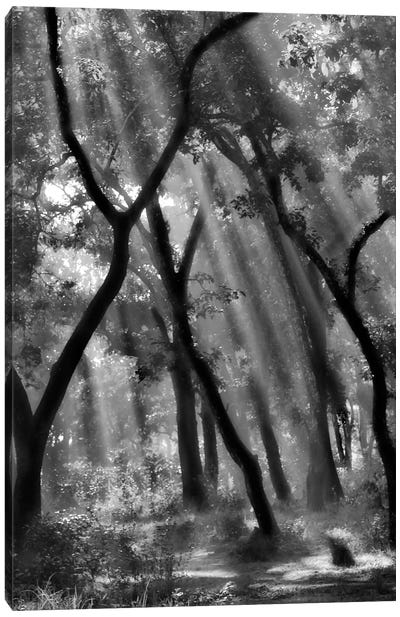 Enchanted Forest... Canvas Art Print