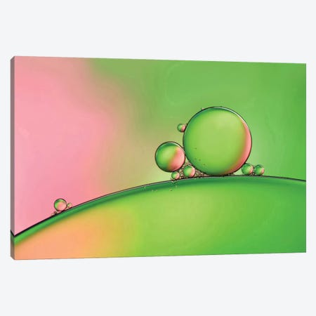 Apple Blush Canvas Print #OXM2266} by Heidi Westum Art Print
