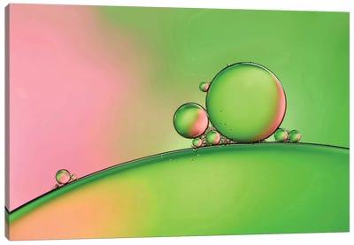 Apple Blush Canvas Art Print