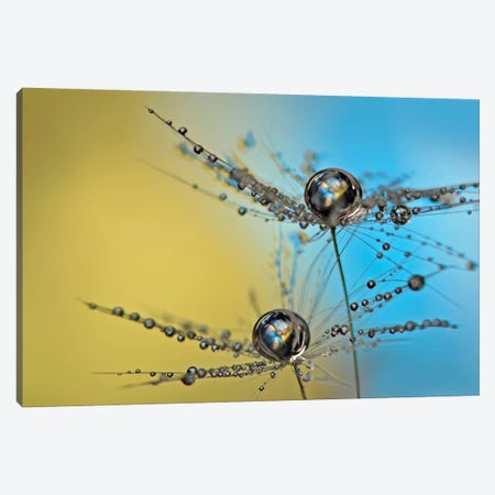 Duo Tone Canvas Print #OXM2270} by Heidi Westum Canvas Print