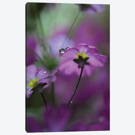 In Pink Surroundings Canvas Print #OXM2275} by Heidi Westum Canvas Art