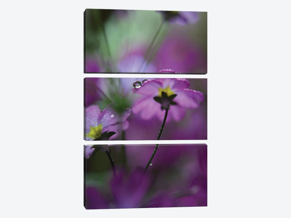 In Pink Surroundings 3-piece Canvas Artwork
