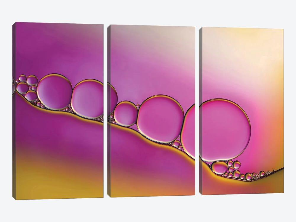 Sweet Blush by Heidi Westum 3-piece Canvas Artwork