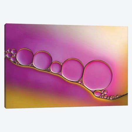 Sweet Blush Canvas Print #OXM2279} by Heidi Westum Canvas Art Print