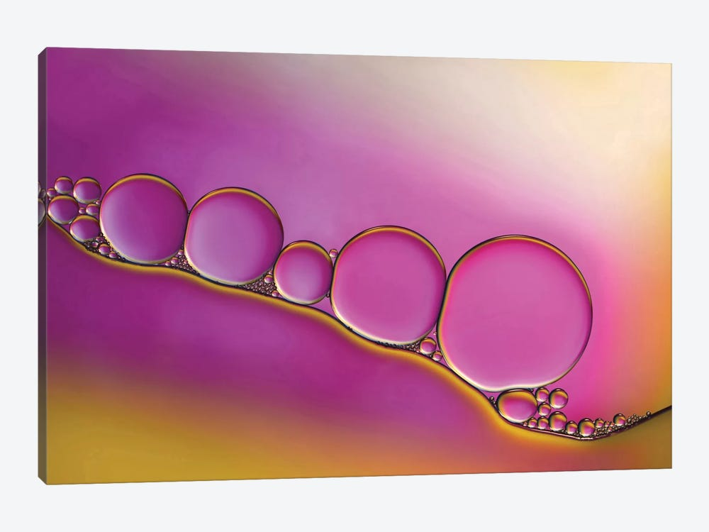 Sweet Blush by Heidi Westum 1-piece Canvas Wall Art
