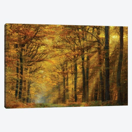 Enchanted Forest Canvas Print #OXM232} by Marianna Safronova Art Print