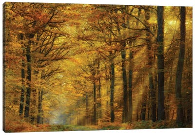 Enchanted Forest Canvas Art Print
