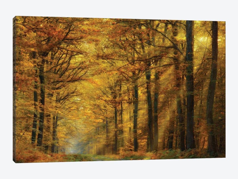 Enchanted Forest by Marianna Safronova 1-piece Art Print