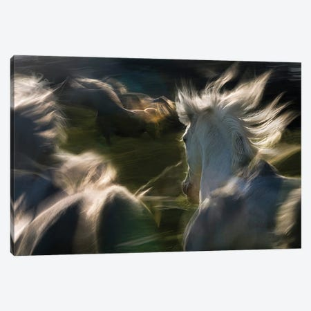 Esata Equina Canvas Print #OXM2336} by Milan Malovrh Canvas Art Print