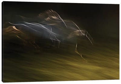Gallop With Wind Canvas Art Print