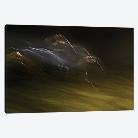 Gallop With Wind Canvas Print #OXM2337} by Milan Malovrh Canvas Art Print