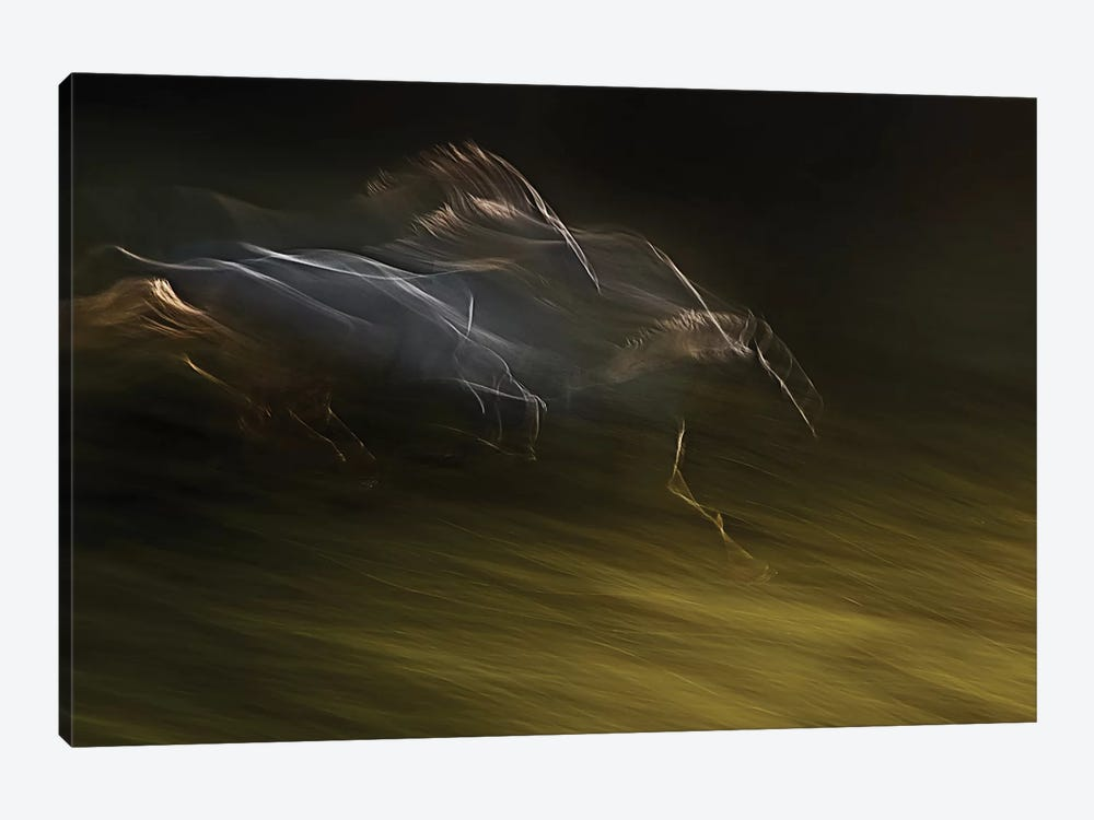 Gallop With Wind by Milan Malovrh 1-piece Canvas Art Print