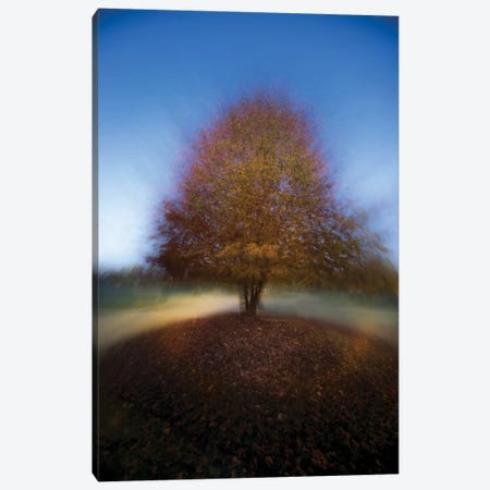 Mystical Tree Canvas Print #OXM2339} by Milan Malovrh Canvas Wall Art