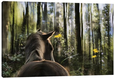 Sound Are Forest Canvas Art Print