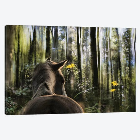 Sound Are Forest Canvas Print #OXM2341} by Milan Malovrh Art Print