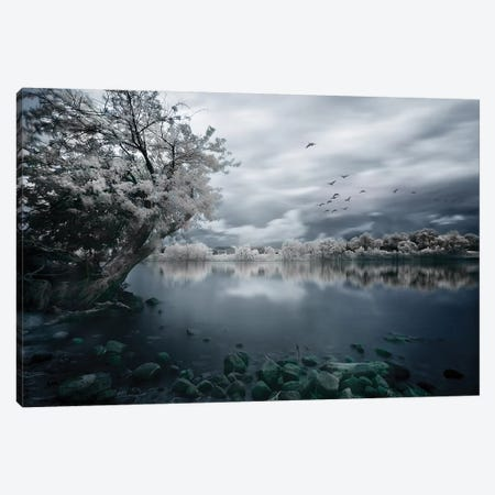 Migration Canvas Print #OXM2362} by David Senechal Photographie Art Print