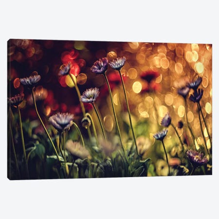 Untitled Canvas Print #OXM2376} by Dimitar Lazarov Art Print