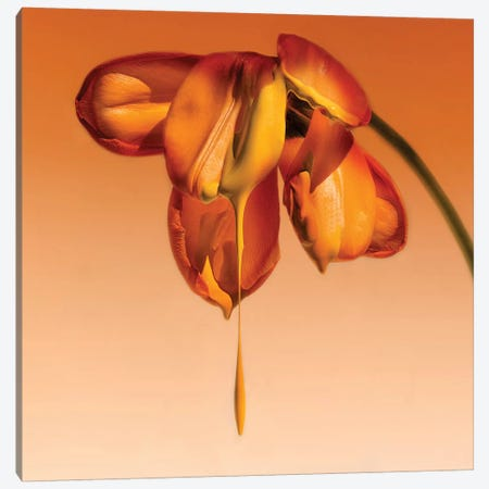 Tears Of A Flower Canvas Print #OXM241} by Kent Mathiesen Canvas Artwork