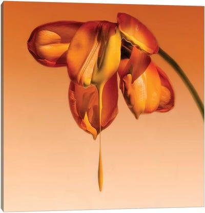 Tears Of A Flower Canvas Art Print