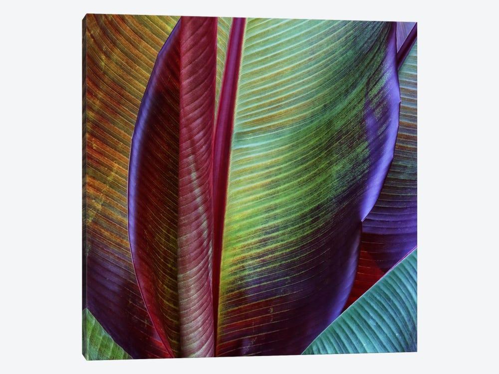 Banana Skin by Francois Casanova 1-piece Art Print
