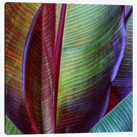 Banana Skin Canvas Print #OXM2452} by Francois Casanova Art Print