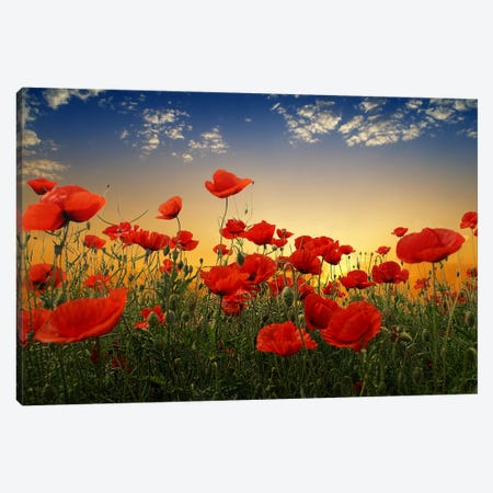 Poppies Canvas Print #OXM2541} by Albena Markova Canvas Print