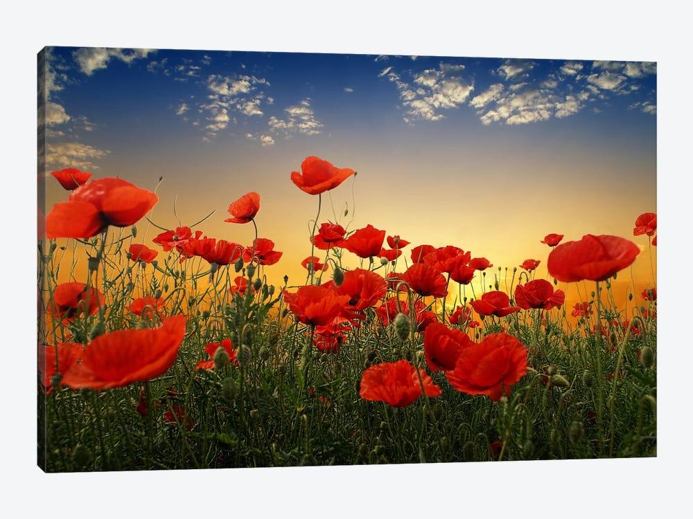 Poppies by Albena Markova 1-piece Canvas Artwork
