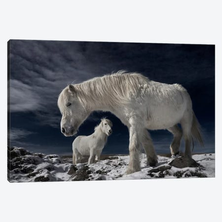 Partners Canvas Print #OXM2561} by Bragi Ingibergsson Canvas Print