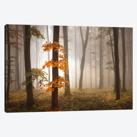 In November Light Canvas Print #OXM2585} by Franz Schumacher Canvas Art
