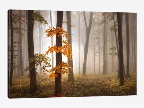 In November Light Art Print By Franz Schumacher Icanvas