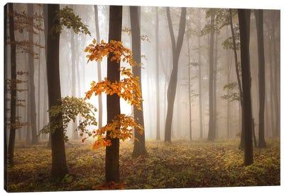 In November Light Canvas Art Print