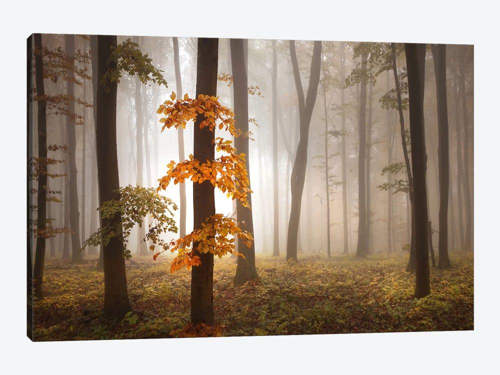 In November Light by Franz Schumacher 1-piece Canvas Artwork