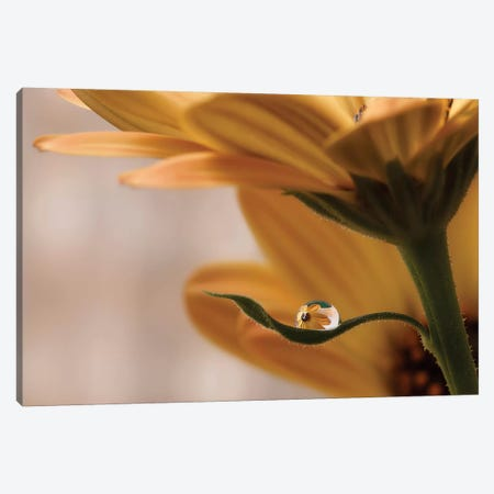Protected Canvas Print #OXM2604} by Heidi Westum Art Print