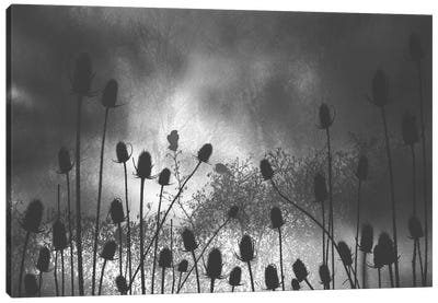 Thistle Finch Canvas Art Print