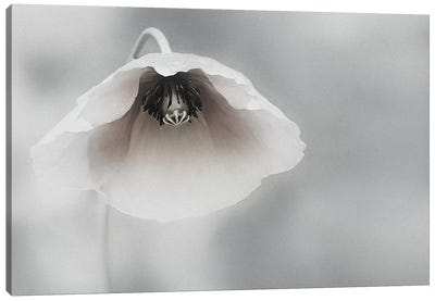 Ephemeral Beauty Canvas Art Print