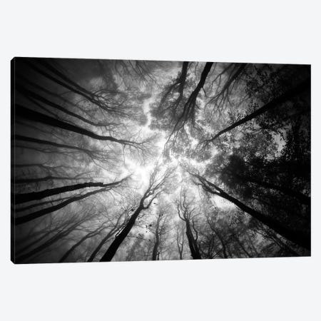 Tree Tops Canvas Print #OXM2676} by Ajven Canvas Artwork