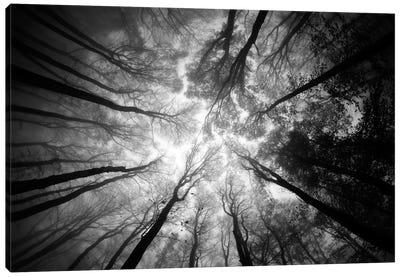 Tree Tops Canvas Art Print